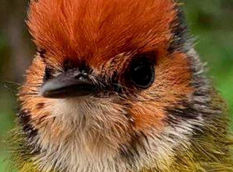 Humboldt lanza nueva expedición para conocer el estado de las aves