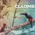 Birding in Colombia is such a good idea